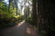 Wanderweg im Redwood NP