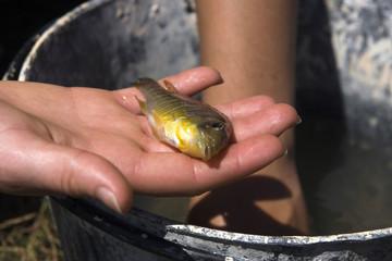 Pescado en mano