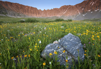 Summer Flower Field - Mayflower Gulch, Colorado