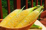 Basket of sweetcorn on a backyard deck poster