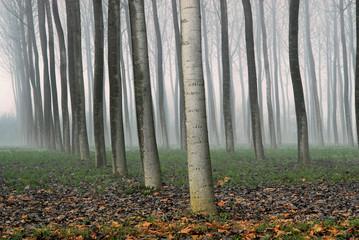 alberi 557