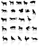 Animals with reflection on white background. poster