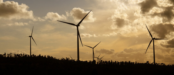 panoramic view of a group of windmills at sunset