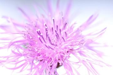 flower surexpose