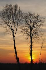 alberi 608