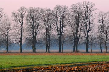 alberi 573