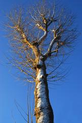 alberi 578