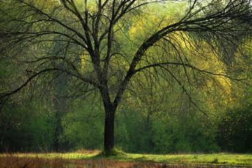 alberi 643