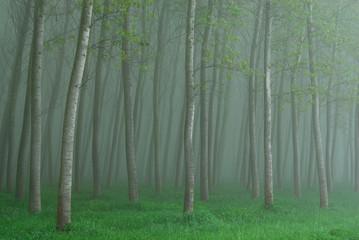 alberi 676
