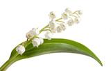 Fototapete Weiß - Blume - Blume