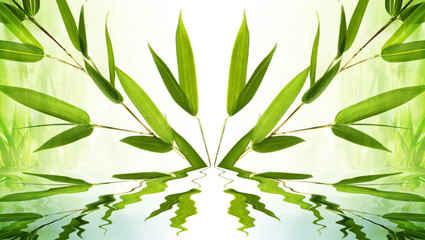 bamboo background symmetry