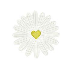 Gänseblümchen in Love