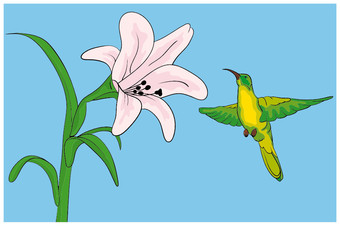 Hummingbird getting nectar from a lilly flower