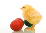 Little easter chicken with dyed eggs poster