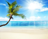 Fototapety palm and sea