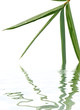 reflets feuilles humides bambou, fond blanc