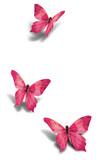Fototapeta piękny - puste - Insekt
