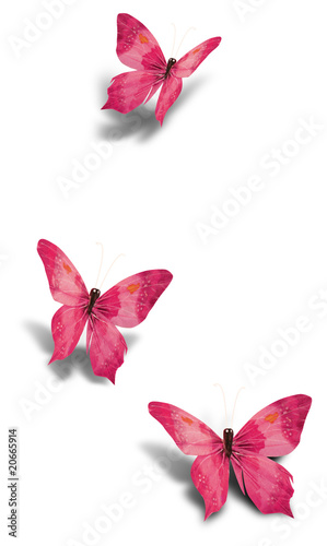 Fototapete Schön - Leere - Insekten