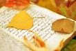 Fall Diary