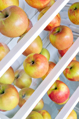 apples in the refrigerator