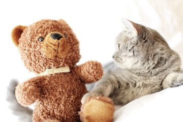 kitten and toy