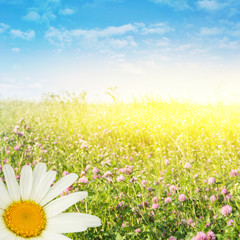 Flower field on a sunny day.