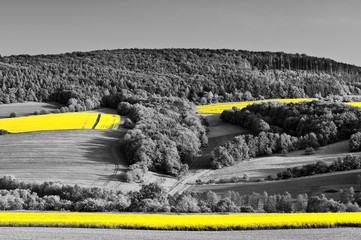 Canola fields in a black and white landscape