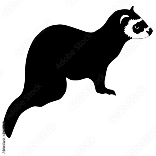 silhouette of ferret