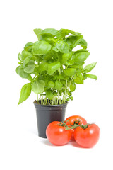 fresh basil and tomatoes over white background