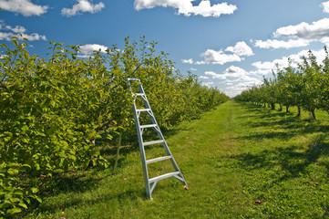 Apple harvest scene