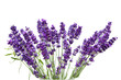 Lavender over white background