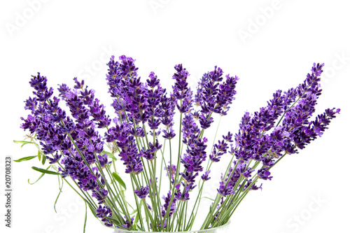 Foto op Canvas Lilac Lavender over white background