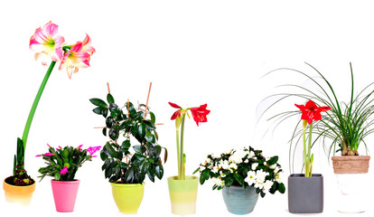 bunte Grünpflanzen in Reihe