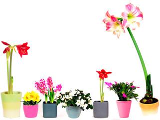 Blühpflanzen Blumentöpfe Reihe