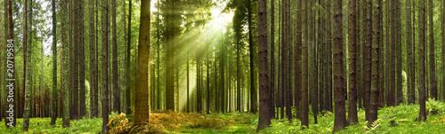 Leinwanddruck Bild Schwarzwald