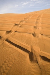 Landscape of Dubai desert with track of off road cars.