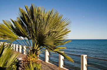 Promenade with palm (Ligurian Sea, Italy)