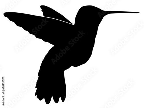 查看水下登录白色绘图羽毛翅膀背景自由艺术设计载体风格飞行鸟类黑色