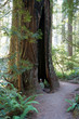 Redwood Nationalpark USA