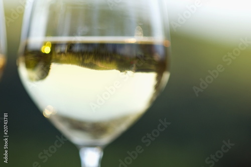 Glass of white wine in vineyard