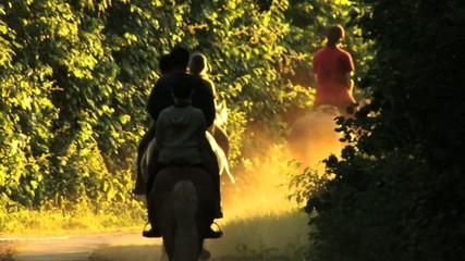 Pferde Reiten Wald Trab Ausritt Sommer