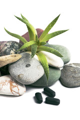 aloe vera and stones on white background