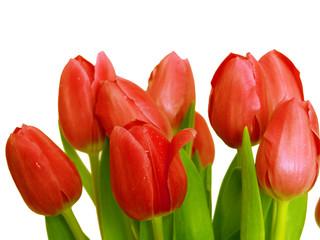 rote tulpen ,blumenstrauß