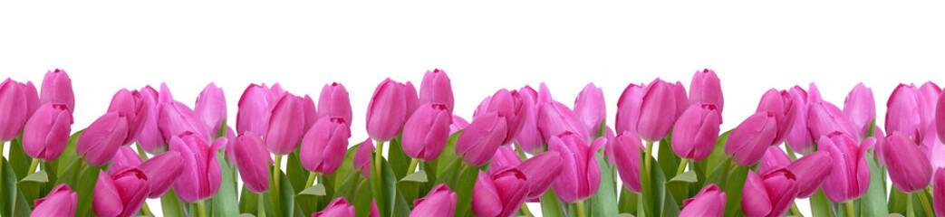 blumenhintergrund,tulpen