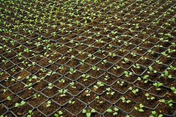 Growing Little Plants