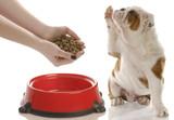 dog begging for food poster