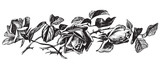 antique roses engraving (vector) poster