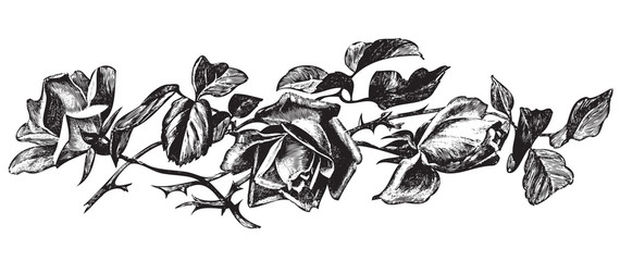 antique roses engraving (vector)