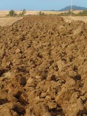 Campo arato