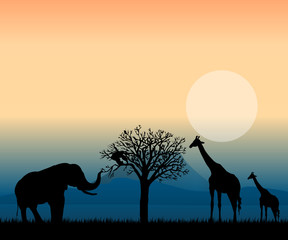 african landscape at sunset vector